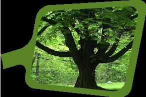 biyomimikri araştırmaları merkezi dayanıklı ağaç gövdeleri